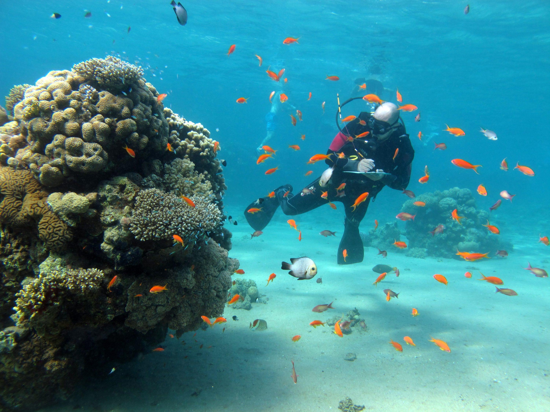אטרקציה לחוקרים וגם לתיירים. אלמוגים באילת צילום: אסף זבולוני