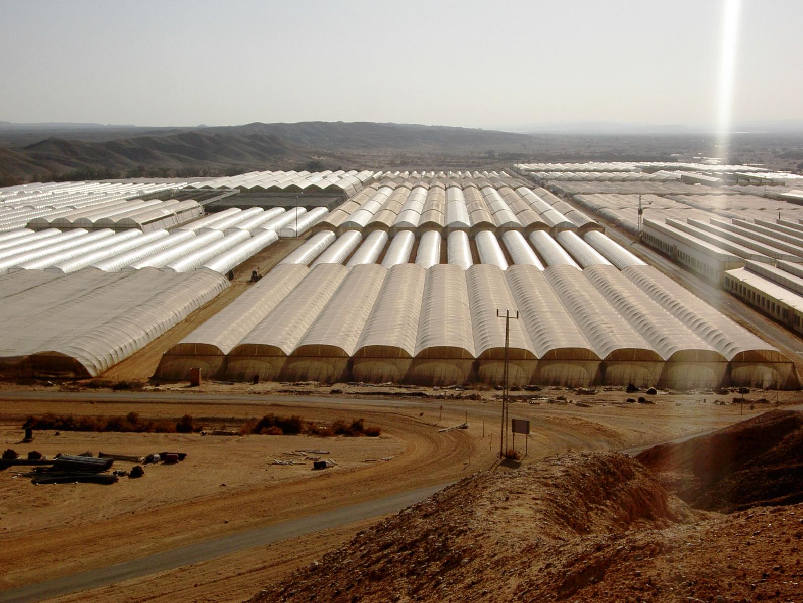 השטחים הירדניים צחיחים, המובלעת הישראלית פורחת. שטחים חקלאיים באזור צופר שבערבה צילום: המועצה האזורית הערבה התיכונה